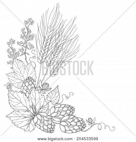Vector stem with ornate Hops and barley ears. Outline leaves, barley and hops in black isolated. Outline hops and barley for beer and brewery decor. Beer elements in contour style for coloring book.