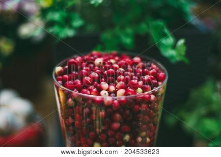 Close-up view of glass with fresh raw red cranberries (oxycoccus palustris) just recently harvested for Thanksgiven day; defocused background; shallow depth of field