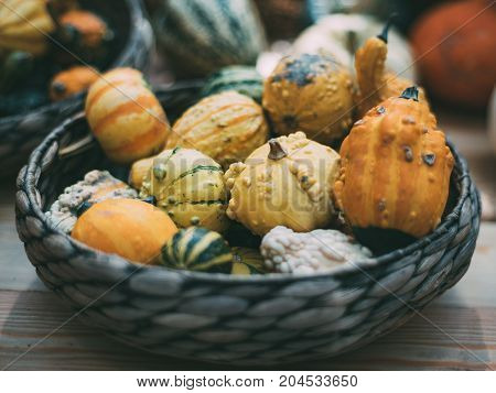 Wicker wooden basket full of recently harvested decorative inedible pumpkins of different varieties shallow depth of field