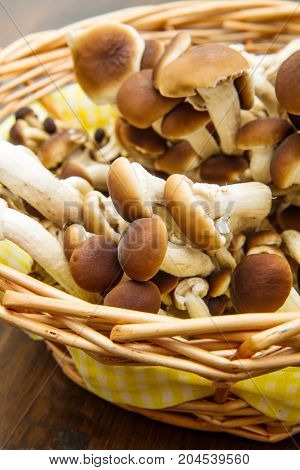group of chiodini mushroon in straw basket