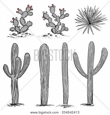 Cacti collection. Prickly pear cactus, blue agaves, and saguaro. Hand drawn cactus vector. Grey and pink palette
