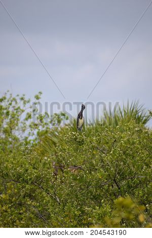 Great blue heron perched on higher ground