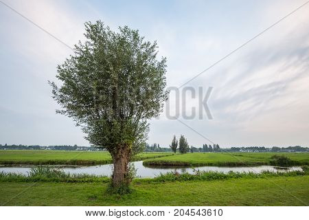 Willow tree in Dutch polder landscape with canals grassland and cloudy sky
