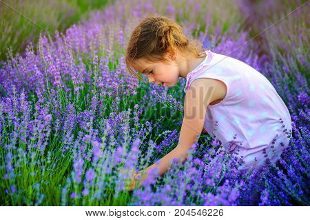 Girl with funny braids collects bouquet in lavender field