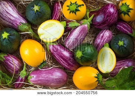 Fresh Organic Vegetables Background, Wallpaper - Round Courgette, Small Eggplants, Diet Concept, Ita