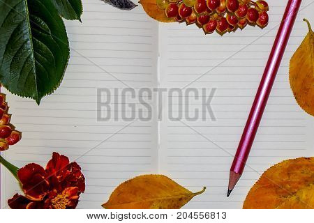 A white sheet of a notebook autumn yellow and green leaves berries of a guelder-rose a pencil. Place for the text.