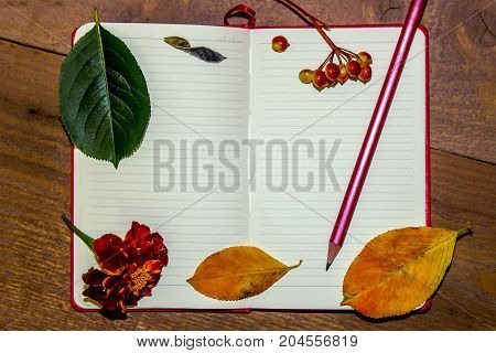 A white sheet of a notebook autumn yellow and green leaves berries of a guelder-rose a pencil on a wooden background. Place for the text.