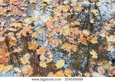 Fallen leaves in a puddle autumn background
