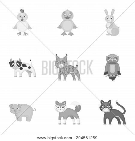 Farm, zoo, ecology and other  icon in monochrome style.Marsupial, Australia, nature icons in set collection.