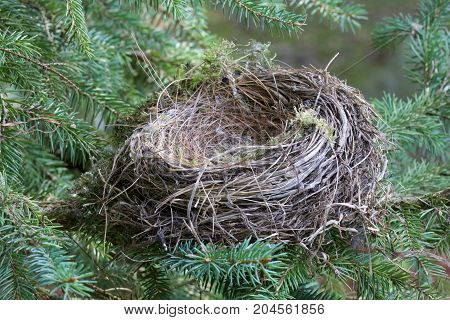 The empty nest.  The baby birds have grown up and flown away,  Empty nester parents can feel sad and lonely after their children have grown up and left the family home.