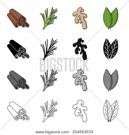 Cinnamon bark, spicy rosemary, ginger root, bay leaf. Spices set collection icons in cartoon black monochrome outline style vector symbol stock illustration .