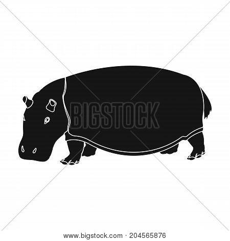 Hippopotamus, an omnivorous artiodactyl animal. The African great hippopotamus single icon in black style vector symbol stock illustration .