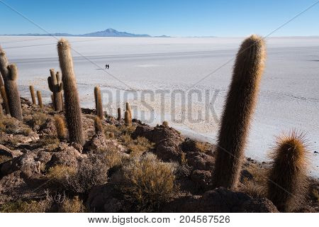 Incahuasi island (Cactus Island) located on Salar de Uyuni the world's largest salt flat area Altiplano Bolivia South America