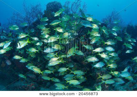 Fish Aggrgation