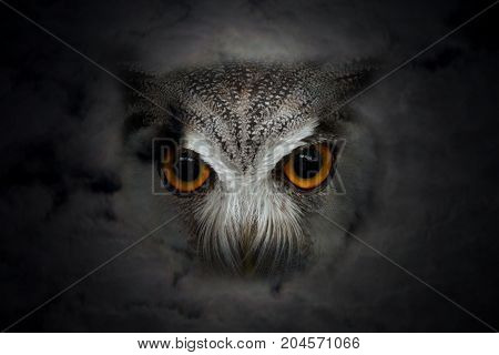 Close up of owl head with orange big eye in dark night cloud and moonlight for halloween background.