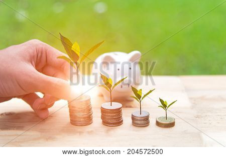 Man hand holding coin money cover growing plant and piggy bank with money coins in saving money. Investment and Saving Concept