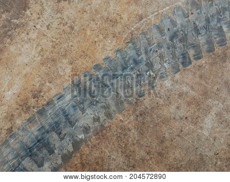 tire track of forklift on cement floor