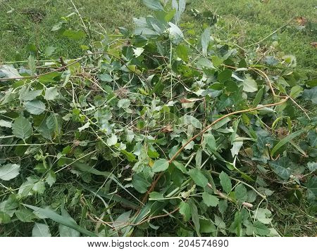leaves and branches and weeds on a green lawn
