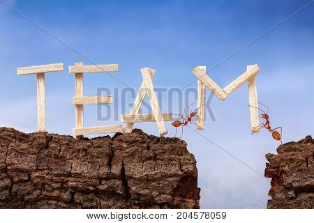 Ants carry word team across wooden cliff with sky background, teamwork concept