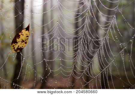 A yellow leaf caught in a spiderweb in the woods.