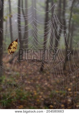 A spider web in the woods with a yellow leaf caught in it. The web is wet with dew