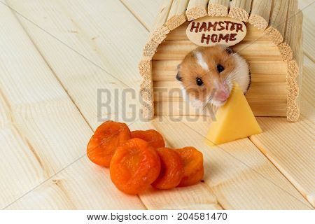 A hamster eats cheese from his wooden house.
