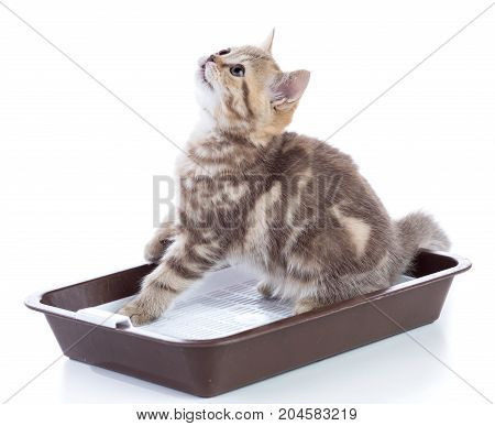 Funny kitten sitting in a cats toilet isolated on white background