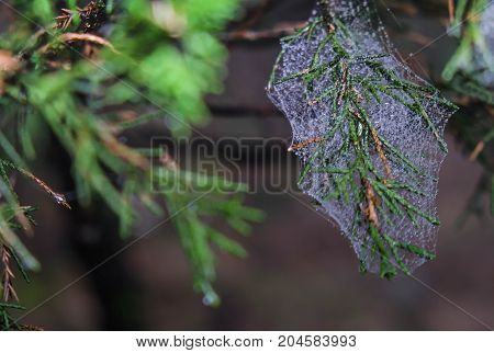 Abstract Spiderweb on black background. It's seen in the nature. in this picture I seen at Wudang Mountain Hubei China