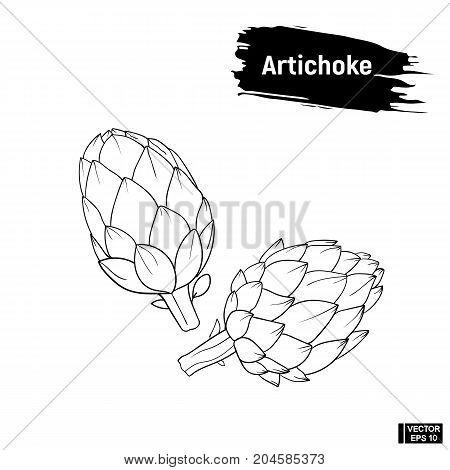 Artichoke Sketch, Vegetarian Products.