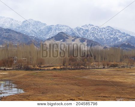 A Snow Mountain And Leh Village View With Green Tree. Leh, India