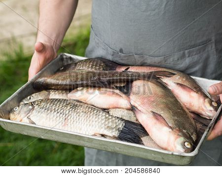 Men's hands hold a tray with freshly caught fish carp and bream