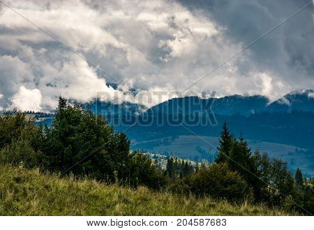 Forest On Hillside On Cloudy Day