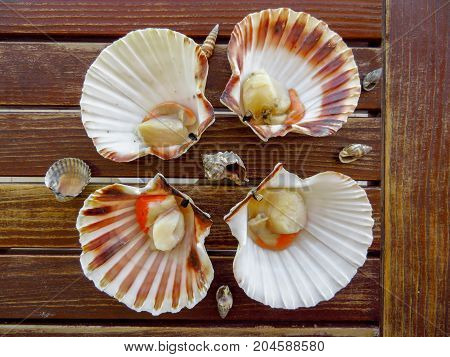 Fresh scallops on the wooden table surface