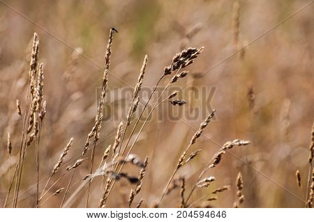 Background of feather grass. Nature fields and steppes of Europe.