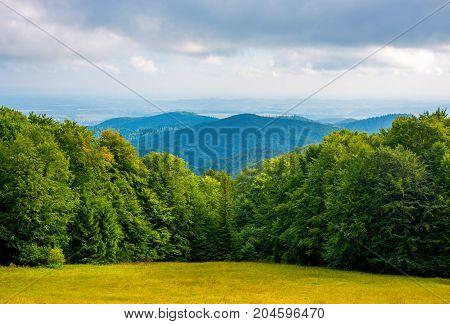 Photo of beautiful green forest and valley in Carpathian mountains