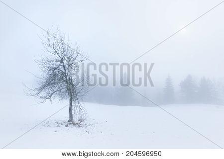 Winter landscape in misty woods - Tara mountain Serbia.