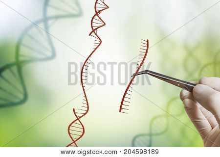 Hand Is Inserting Sequence Of Dna. Genetic Engineering, Gmo And