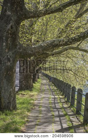 Tree alley with lane and railing in summer day