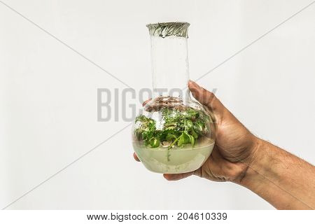 The Hand of the Researcher with Test Tube with in vitro cloned microplant, copy space
