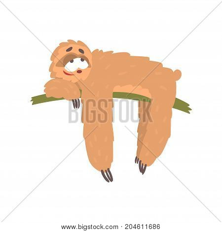Cute happy cartoon lazy sloth character lying on the tree, funny tropical animal vector Illustration on a white background