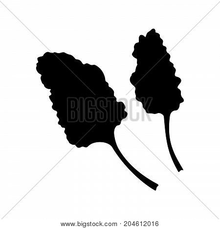 Two branches of chards ( shade pictures )