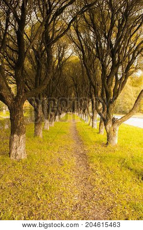 Beautiful alley of trees. Autumn in Russia.