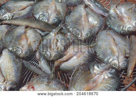 Food Preservation,salty Fish Drying With Sunlight Cover By Plastic Net