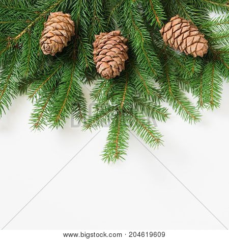 Christmas tree branches with cedar cones on a white background. View from above.