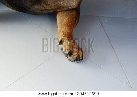 The Leg Of Black And Brown Dog