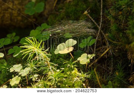 A small plant is hidden under a spiderweb of sunlight