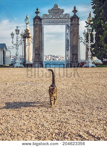 ISTANBUL, TURKEY: Cat walking from the Dolmabahce Palace Gate leading to the Bosphorus Strait. Istanbul, Turkey on October 7, 2014