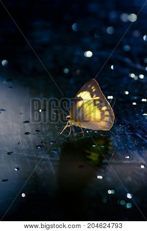 butterfly on mirror glow in the dark - Stock Image