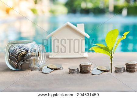 Plant a coin and plant a green tree on an old wood background.