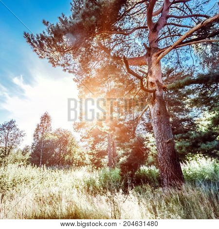 Summer landscape clear panorama. Beautiful wild forest